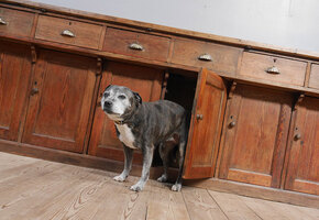 Деменция у собак и кошек: как поставить диагноз и чем помочь