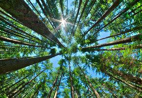 Досуг грибника: 10 вещей, которые могут угрожать нам в лесу