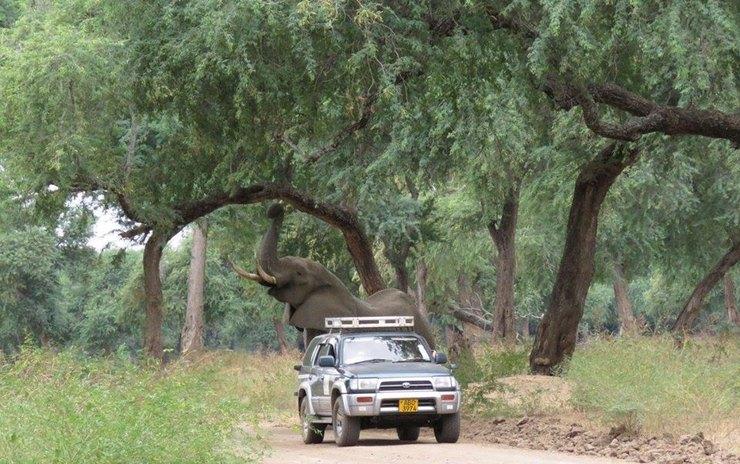 слон вышел клюдям