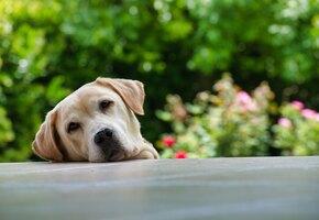Умри: собака нашла оригинальный способ задержаться на прогулке подольше