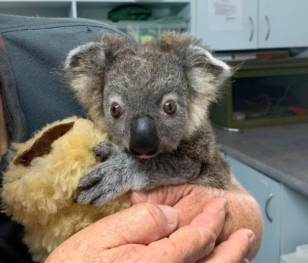 Чудесные спасения животных вАвстралии: 5 историй, которые заставляют верить вдобро