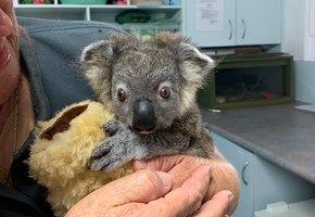 Чудесные спасения животных в Австралии: 5 историй, которые заставляют верить в добро