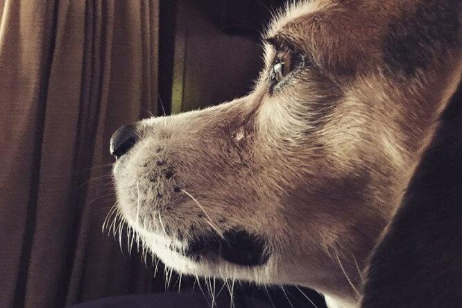 Пес-потеряшка 8 лет искал родной дом. Увидев хозяина, он заплакал
