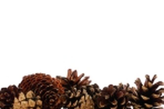 Орехи, снижающие аппетит
