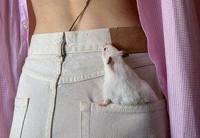 Хочу в эту семью крысой»: чтобы крысу не укачало в самолете, ей наняли водителя
