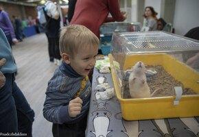 Фестиваль «Кошки-Мышки» с животными из приютов пройдет 10 апреля в Москве