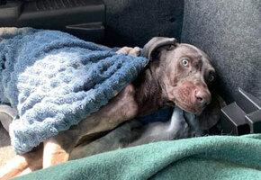 На парковке нашли пса, от которого остались кожа да кости. Но вот каким он стал