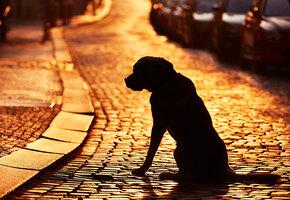 В США семья воссоединилась с пропавшим псом, который 10 лет скитался по миру
