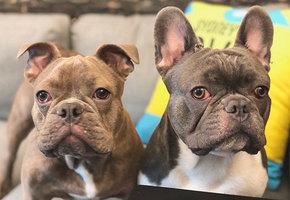 Работа мечты: компания готова платить человеку, который будет путешествовать по миру с милыми щенками