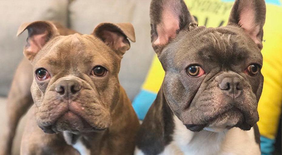 Работа мечты: компания готова платить человеку, который будет путешествовать помиру смилыми щенками