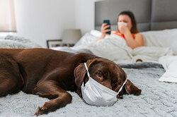 Можно ли заразиться коронавирусом отдомашних животных? Объясняют врачи