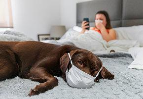 Можно ли заразиться коронавирусом от домашних животных? Объясняют врачи