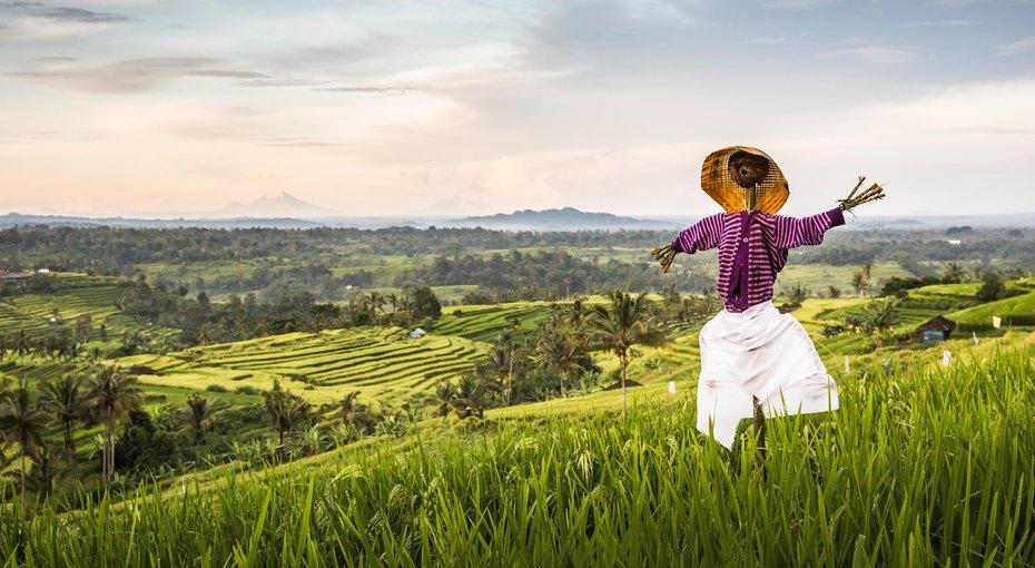 Кыш! 8 оригинальных способов защитить урожай отптиц