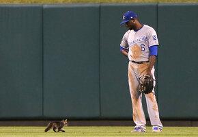 В США кошка вырвалась на поле и изменила ход матча