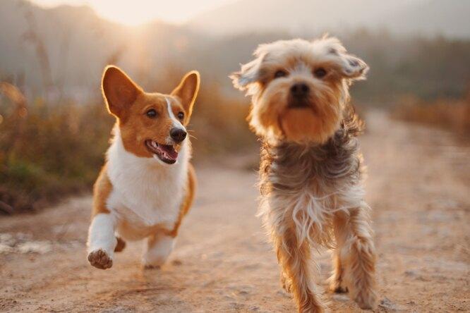 Тиндер длясобак: новое приложение помогает бездомным псам найти хозяев