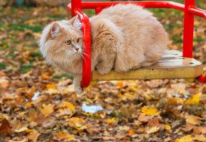 Внуков не привезли: видео пенсионера, качающего кота на качелях, стало вирусным