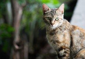 «В прошлой жизни был пилотом»: в Минводах кот прибегает обедать в самолёты