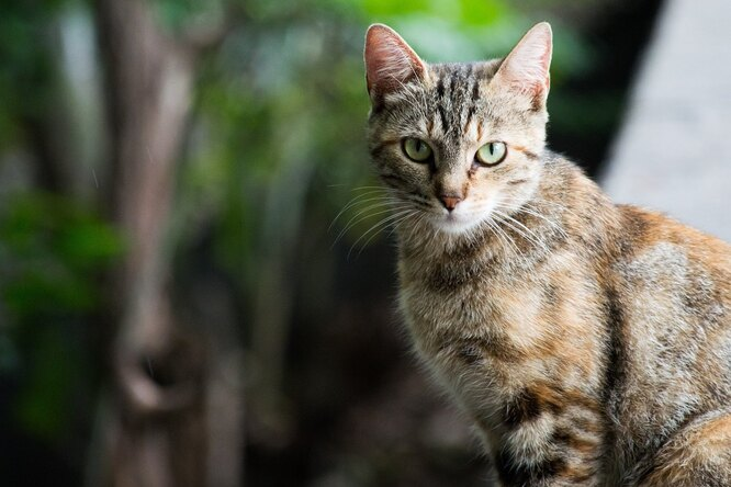 «В прошлой жизни был пилотом»: вМинводах кот прибегает обедать всамолёты