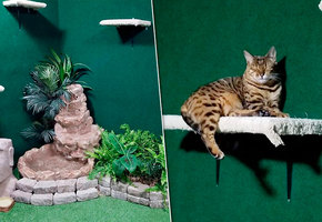 Ради котов погибшего брата мужчина переделал подвал в настоящие джунгли. И это надо видеть
