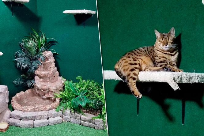 Ради котов погибшего брата мужчина переделал подвал внастоящие джунгли. Иэто надо видеть