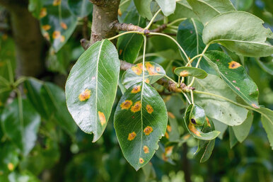 Осторожно, грибок: обзор лучших фунгицидов длялечения растений