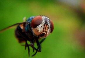 Мошка: как спастись от этих ужасных насекомых