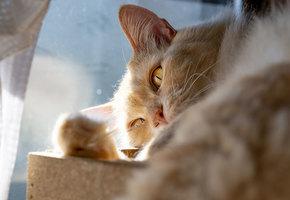 Он был как справочник кошачьих болезней: кот нашёл своего человека и похорошел
