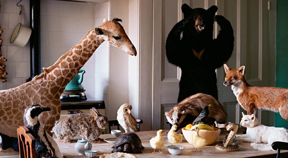 Куда смотрели? 20 самых нелепых инеудобных кухонных интерьеров