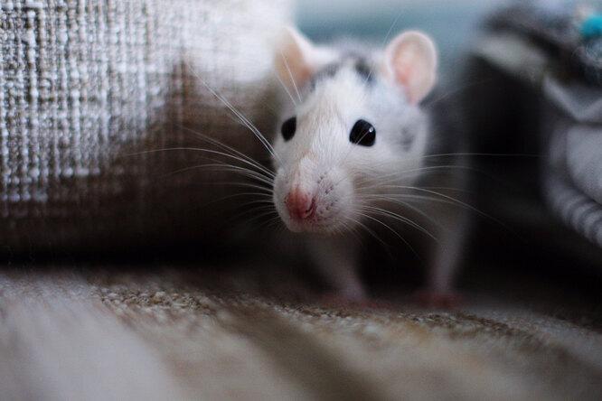 Мама увидела мертвую мышь вдетской ине сразу поняла свою ошибку