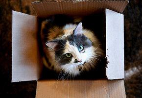 У всех свои причуды! Кошка требует, чтобы перед сном ее катали в коробке