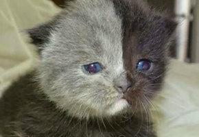 Котенок с «двумя лицами» вырос в самую прекрасную кошку на Земле