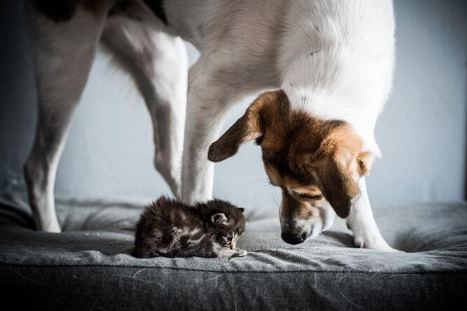 Семья подложила новорожденного котенка кормящей собаке. Вот ее реакция