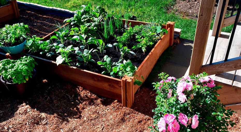 Копать ненужно! 10 классных идей пообустройству огородных грядок
