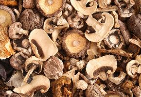 Как сушить грибы в домашних условиях?