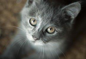 Тест на внимательность: найди кота за 9 секунд
