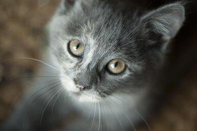 Тест навнимательность: найди кота за9 секунд