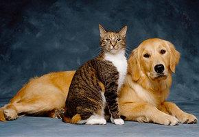 Почтенный возраст: Как правильно обеспечить старость вашей собаке или кошке