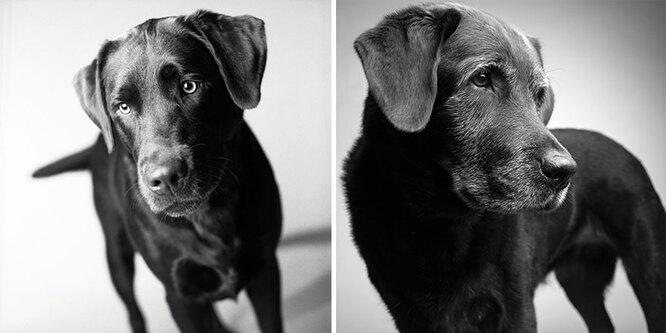 Корбет: 2 года и 11 лет