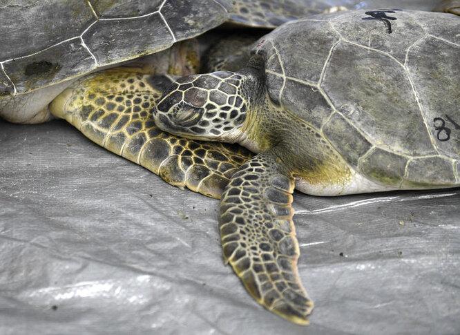 Черепахи приходят в себя в тепле