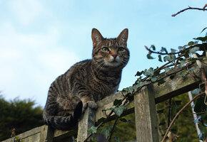 «Ваша кошка прозрачная?» Десятки людей не смогли отыскать животное на фото