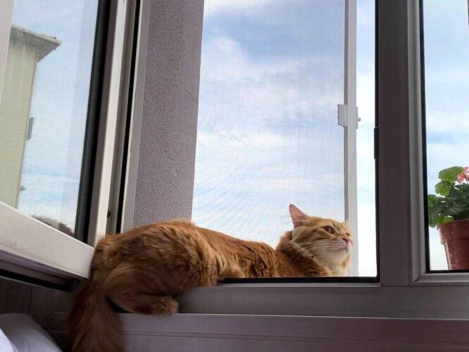 открытые окна опасны для кошек