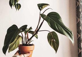 Как помочь комнатным растениям в период отопительного сезона: 3 основных правила