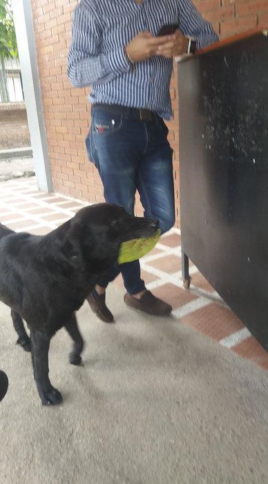 Собака научилась платить за свою еду, наблюдая за людьми
