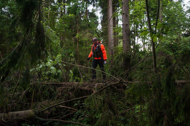 Поиски людей затрудняет бурелом, от которого в России лес не вычищают