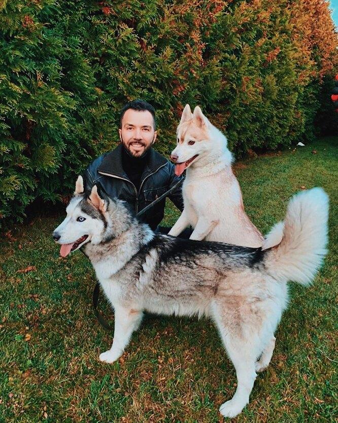 Денис клявер и его собаки