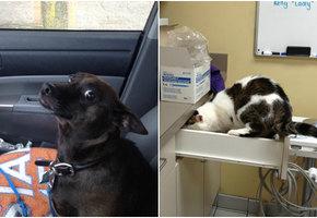 «К ветеринару?! Мы так не договаривались». Они не знали, куда их везут...