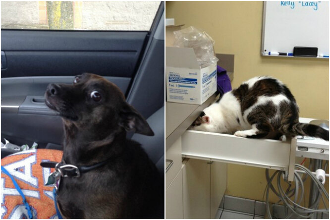 «К ветеринару?! Мы так недоговаривались». Они незнали, куда их везут...
