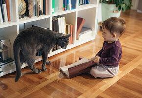 Каких кошек не страшно оставлять наедине с детьми