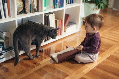 Каких кошек нестрашно оставлять наедине сдетьми