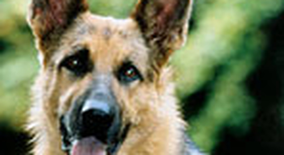Готовим собаку кпрививке
